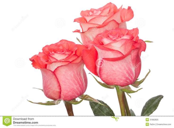 tre-rosa-rosor-31962825