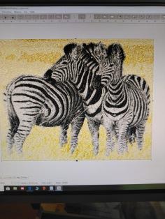3 zebror