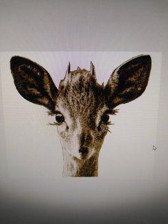 Liten antilop