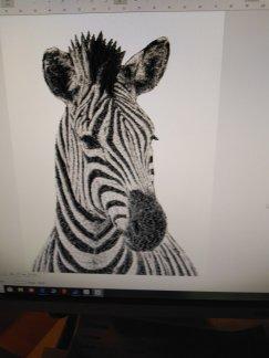Zebrahuvud